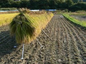 はるばる農園のお米