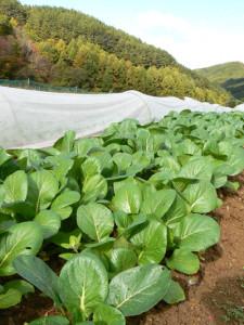 有機野菜のはるばる農園