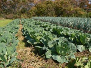 はるばる農園有機野菜